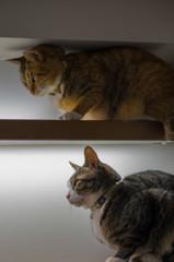 2階建て猫