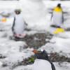 庭先ペンギン1