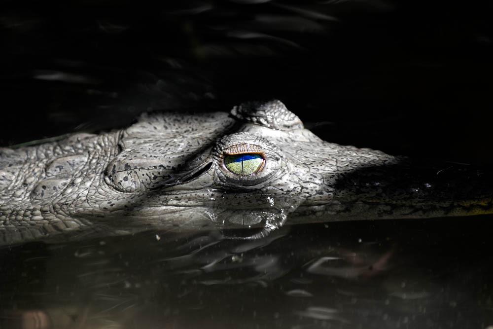 捕食者の眼