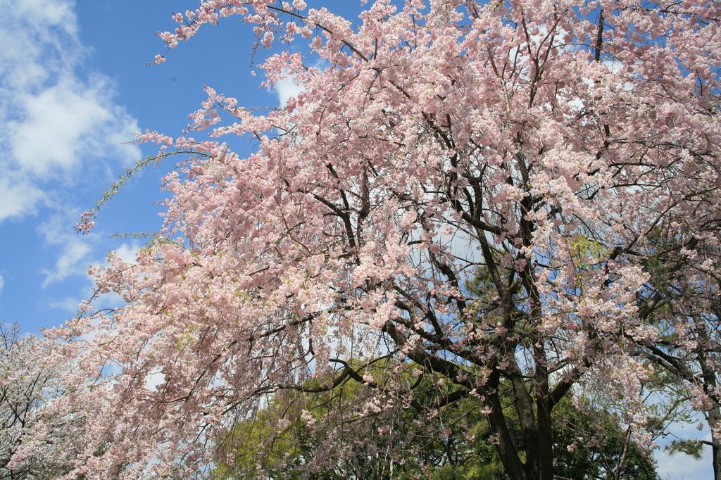 春だよ~!