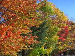 秋色~萌木の村 6