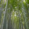 鎌倉・報国寺1