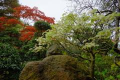 鎌倉・報国寺3