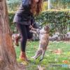 落葉の園で猫とダンス!