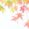 柔らかな秋