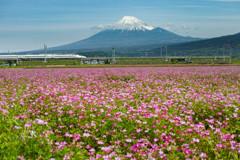 富士山れんげまつり(の後)