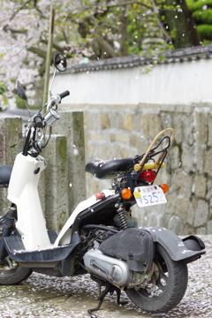 桜の花びらたち