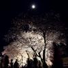 桜花を行き交う