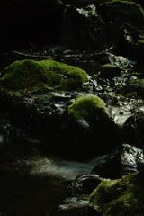 苔、緑色に輝いて