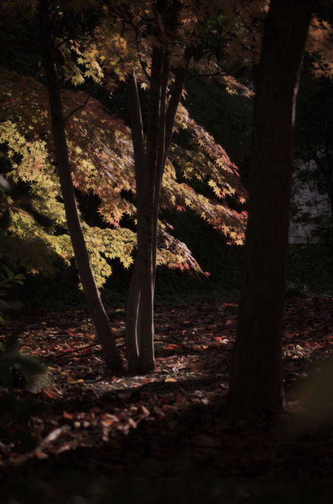 秋に届く陽の光