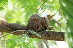 木陰で笹むすび