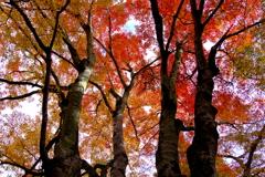 日高邸跡の紅葉