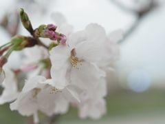 開花の足音①