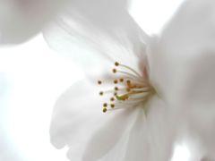 開花の足音③