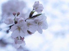 開花の足音②