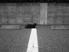 猫スナップ