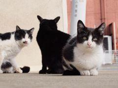 猫神社 part2