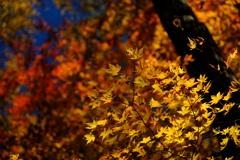 八ヶ岳・彩の森2