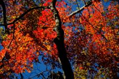 八ヶ岳・彩の森1