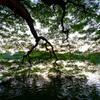 ホアンキエム湖・水景(VI)