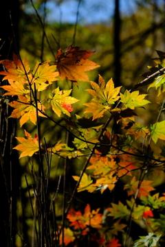 八ヶ岳・彩の森3