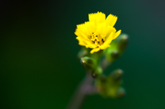 庭の四季_春07