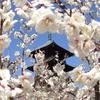 備中国分寺と梅