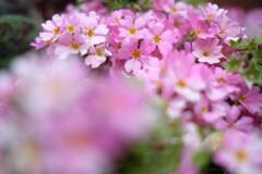 春の花~2021~その8