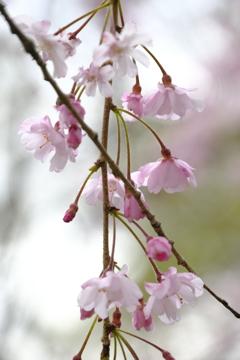 春の花~2021~その11
