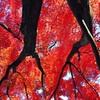 秋に燃ゆる(iPhoneバージョン)