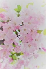 春の花~2021~その9