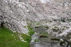 春の花~2021~その3