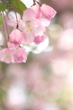 春の花~2021~その4