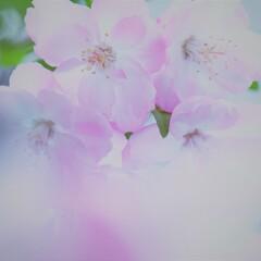 春の花~2021~その7