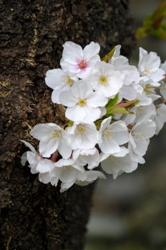 春の花~2021~その1