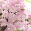 春の花~2021~その13