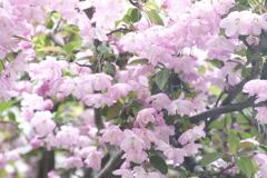春の花~2021~その12