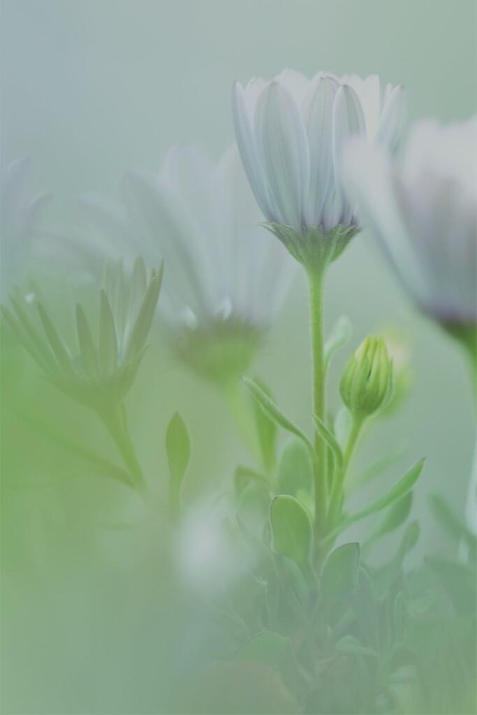 春の花~2021~その6