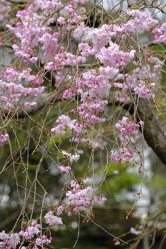 春の花~2021~その2