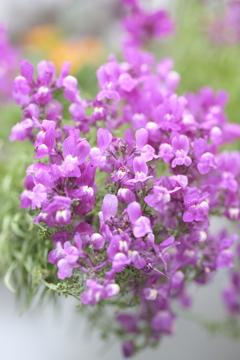 春の花~2021~その5