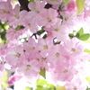 春の花~2021~その10