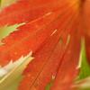 紅葉~2020~その3