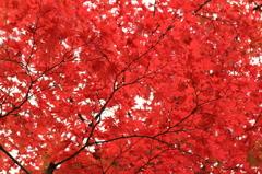 あなたの紅い色