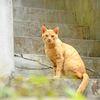モデルの猫さん