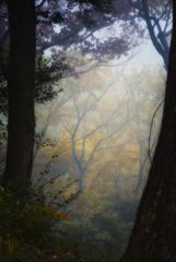 森林(霧)
