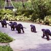 Animals in Singapore 10