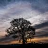 Tree , Sunrise , Clouds ,  and Sun halo