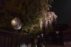 角館夜桜 Ⅷ