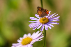今年初の蝶撮影