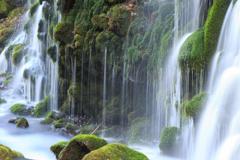 三月の元滝 Ⅲ 苔滝